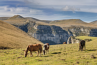 Spain, Aragon, Central Pyrenees, Ordesa y Monte Perdida National Park, Canon de Anisclo, wild horses on meadow - LAF000362