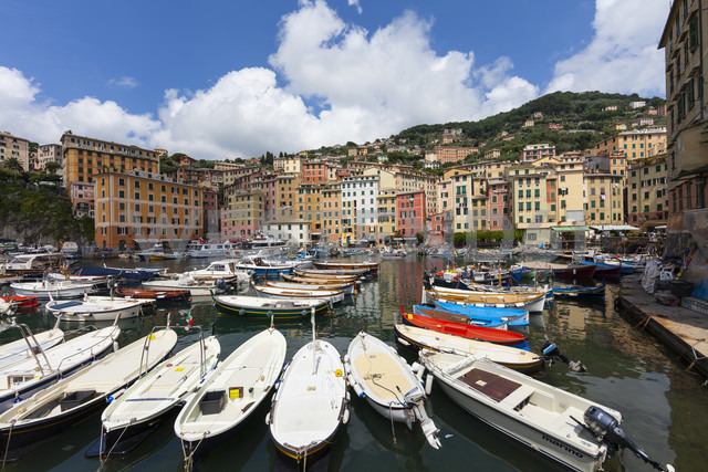 Italy, Liguria, Province of Genoa, Camogli, fishing boats at harbour - AMF001541