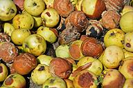 Rotten apples, close-up - AX000599
