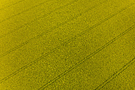 Germany, Bavaria, blossoming rape seed field, top view - HSIF000323