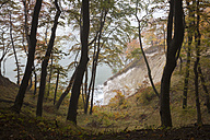 Germany, Mecklenburg-Western Pomerania, Ruegen, Jasmund National Park, beech forest and chalk cliff - WIF000258