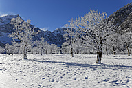 Austria, Tyrol, Eng, Grosser Ahornboden, landscape with snow covered maple trees - GFF000377