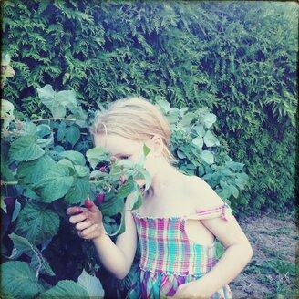 Summer, summer dress, little girl, raspberries, explorers, Leipzig, Germany - BMF000790