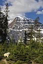 Canada, Alberta, Rocky Mountains, Jasper National Park, Banff Nationalpark, mountain goat (Oreamnos americanus) in front of mountainscape - FOF005585
