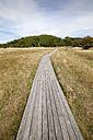Germany, Mecklenburg-Western Pomerania, Ruegen, Kreptitzer Heide Nature Reserve, wooden boardwalk - WIF000296