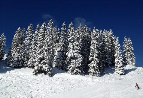 Austria, Kitzbuehel mountains, fir forest - SRSF000422