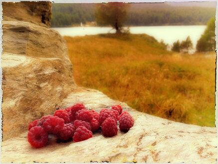 Switzerland, Engadin, St. Moritz, wild raspberries on rock - SRSF000431