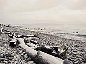 Baltic Sea, Mecklenburg-Vorpommern, Ruegen, Germany, pier, Selin, Beach, winter - MJF000516