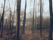 Forest in motion, Bonn, North Rhine-Westphalia, Germany - MEAF000012