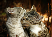 Two young cuddling cats - SLF000256