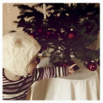 Toddle at Christmas - GSF000682