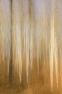 Germany, Baden-Wuerttemberg, Beech forest, wipe effect - ELF000809