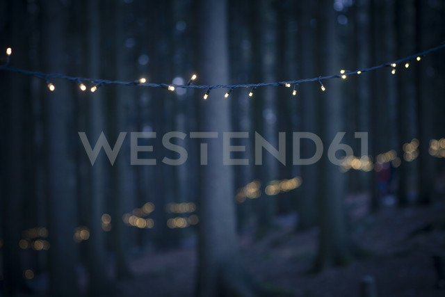 Germany, Bavaria, Sankt Englmar, Fairy lights in forest - SBDF000442 - Susan Brooks-Dammann/Westend61