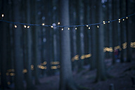 Germany, Bavaria, Sankt Englmar, Fairy lights in forest - SBDF000442