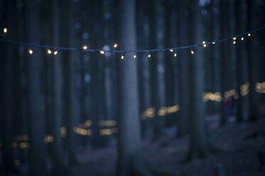 Germany, Bavaria, Sankt Englmar, Fairy lights in forest - SBDF000442