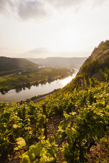 Germany, Rhine-Palatinate, View of Moselle Valley near Dieblich, vineyards at Moselle river - WDF002162