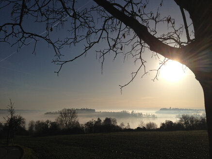 Mainau Island in morning fog, Germany, Baden-Wuerttemberg, Constance - JEDF000079