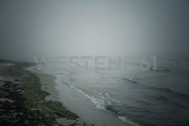 Germany, Mecklenburg-Western Pomerania, Ruegen, Baltic Sea in winter - MJF000603