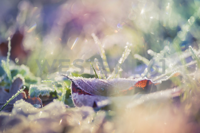 Leaves and grass in winter, close-up - MJF000644