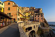 Italy, Liguria, Cinque Terre, Manarola - AM001684
