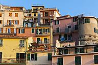 Italy, Liguria, Cinque Terre, Manarola - AM001695