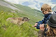 Austria, Carinthia, Kaiser-Franz-Josefs-Hoehe, girl photographing and boy feeding alpine marmot (marmota marmota) - PAF000283