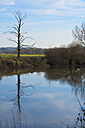 Germany, Hesse, Limburg, dead tree and water reflections at Lahn river - MHF000266