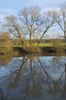 Germany, Hesse, Limburg, tree and water reflections at Lahn river - MHF000268