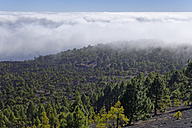 Spain, Canary Islands, La Palma, Cumbre Vieja at San Martin volcano near Fuencaliente - SIEF004985