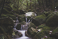 Japan, Yakushima, Waterfall in the rainforest, Unesco World Heritage Natural Site - FLF000380