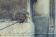 Italy, Sicily, Palermo, Stray cat sitting at church wall - MF000811