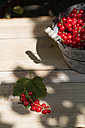 Metal bucket of red currants on wooden garden table - SBDF000520