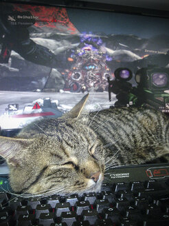 Cat sleeping on keyboard, first-person shooter - HA000256