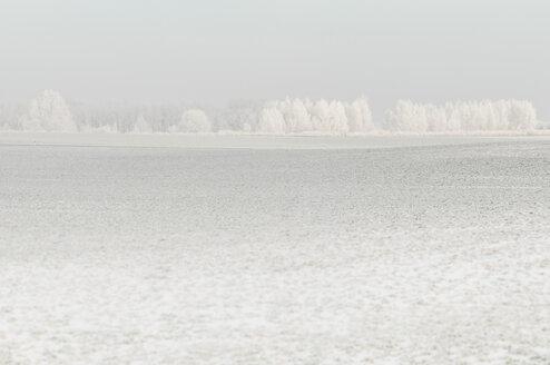 Germany, Saxony, white winter landscape - MJF000764