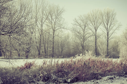 Germany, snow covered winter landscape - MJF000769