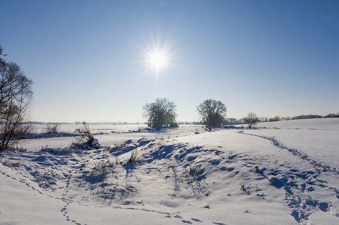 Germany, winterlandscape at back light - MJF000796