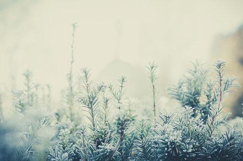 Twigs in winter - MJF000798