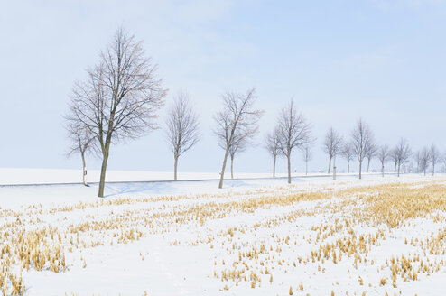 Germany, country road and trees at winter landscape - MJF000808
