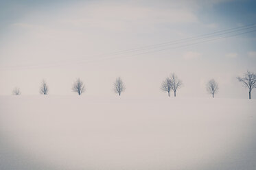 Germany, snow covered white winter landscape with row of trees - MJF000810