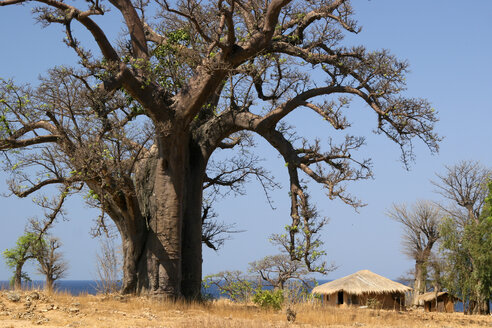 Malawi, Likoma Island, baobab tree (Adansonia) and clay hut at Lake Malawi - JBAF000007