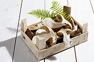 Yellow boletuses (Boletus edulis) and fern leaves in a wooden box on wooden table - CSF020768