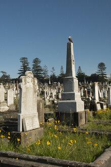 Australia, New South Wales, Sydney, clovally cemetary - FB000191