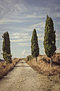 Italy, Tuscany, Val d'Orcia, Dirt track with cypresses - MJF000830