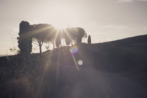 Italy, Tuscany, Val d'Orcia, Cypresses in sunlight - MJF000824
