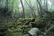 Japan, Yakushima, Waterfall in the rainforest, World Heritage, natural site - FL000383