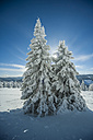 Germany, Baden-Wuerttemberg, Black Forest, Feldberg, trees in winter - PAF000324