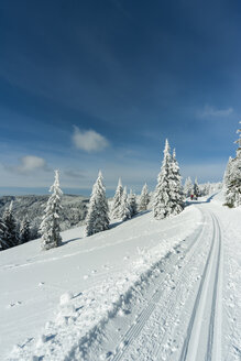 Germany, Baden-Wuerttemberg, Black Forest, Feldberg, way and trees in winter - PAF000320
