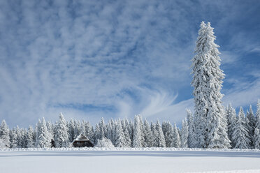 Germany, Baden-Wuerttemberg, Black Forest, Feldberg, Hut and trees in winter - PA000312