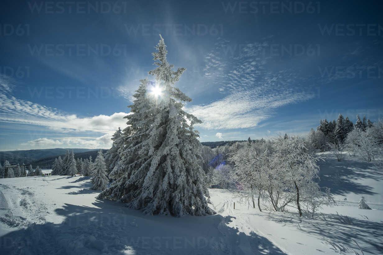 Germany, Baden-Wuerttemberg, Black Forest, Feldberg, trees in winter - PAF000307 - Andreas Pacek/Westend61