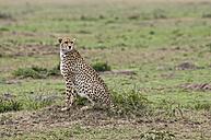 Kenya, Rift Valley, Maasai Mara National Reserve, Cheetah - CB000192